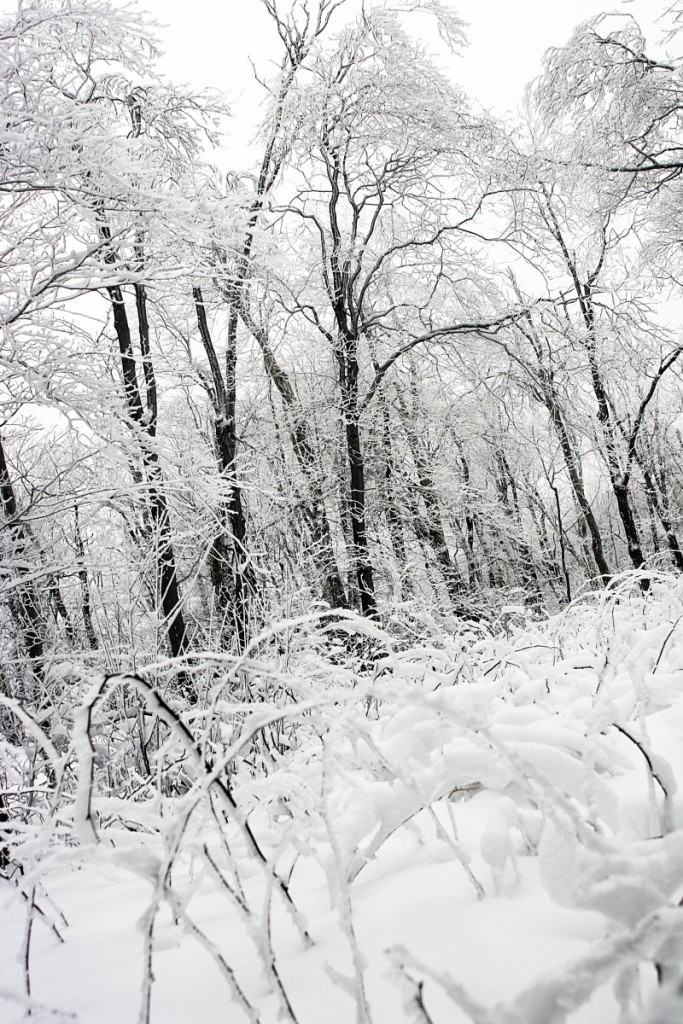 snow-black-and-white-landscape-forest