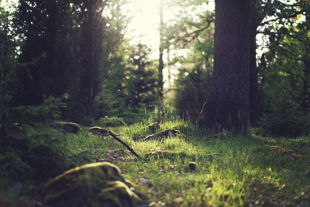 wood-nature-sunny-forest-1200